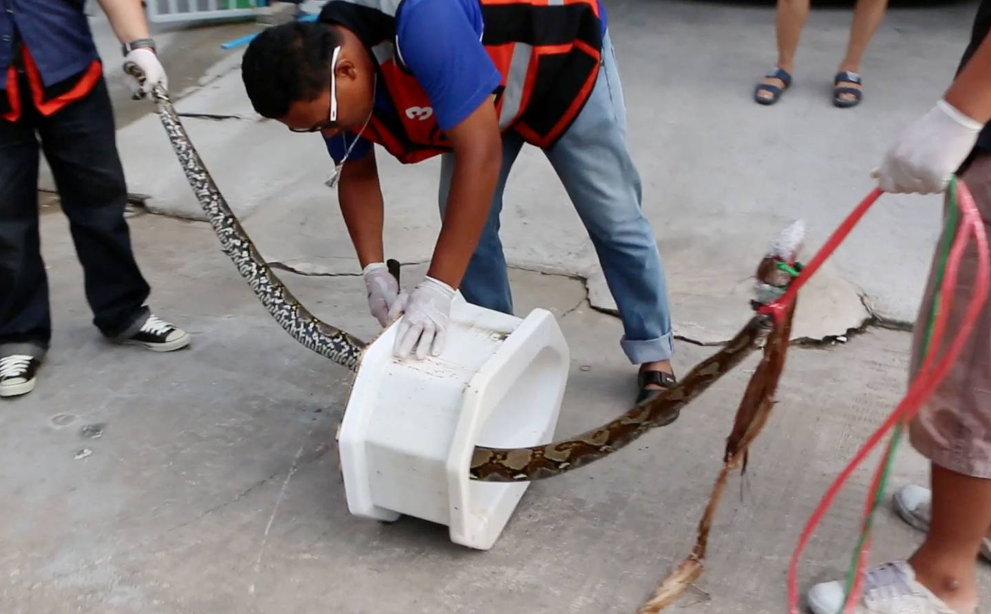 Rescue workers remove the python from a toilet outside a home in Chachoengsao, 90km east of the capital Bangkok