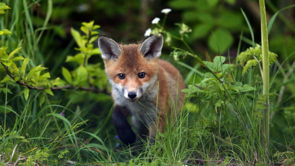 Incidents involving dogs, livestock and wild animals have all been recorded