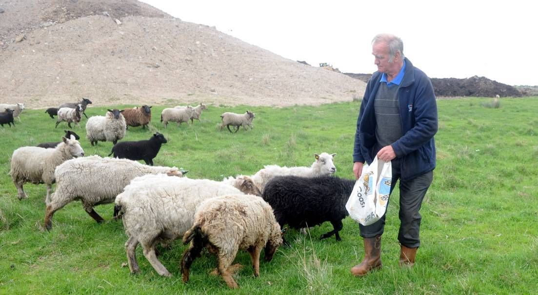 Farmer Robert Brown who had 3 sheep including a lamb killed in a dog attack last Sunday.