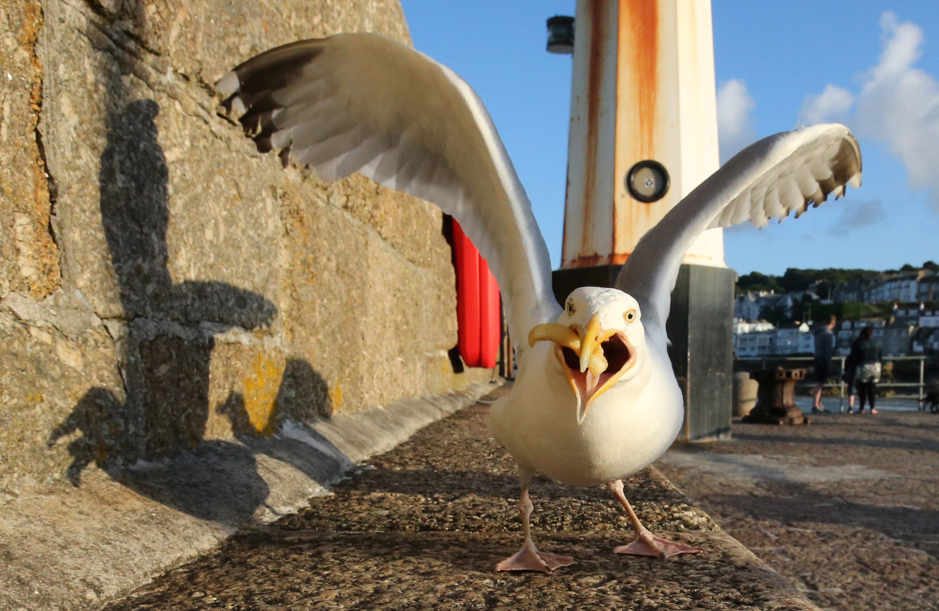 Experts say seagulls learn, remember and even pass on behaviours.