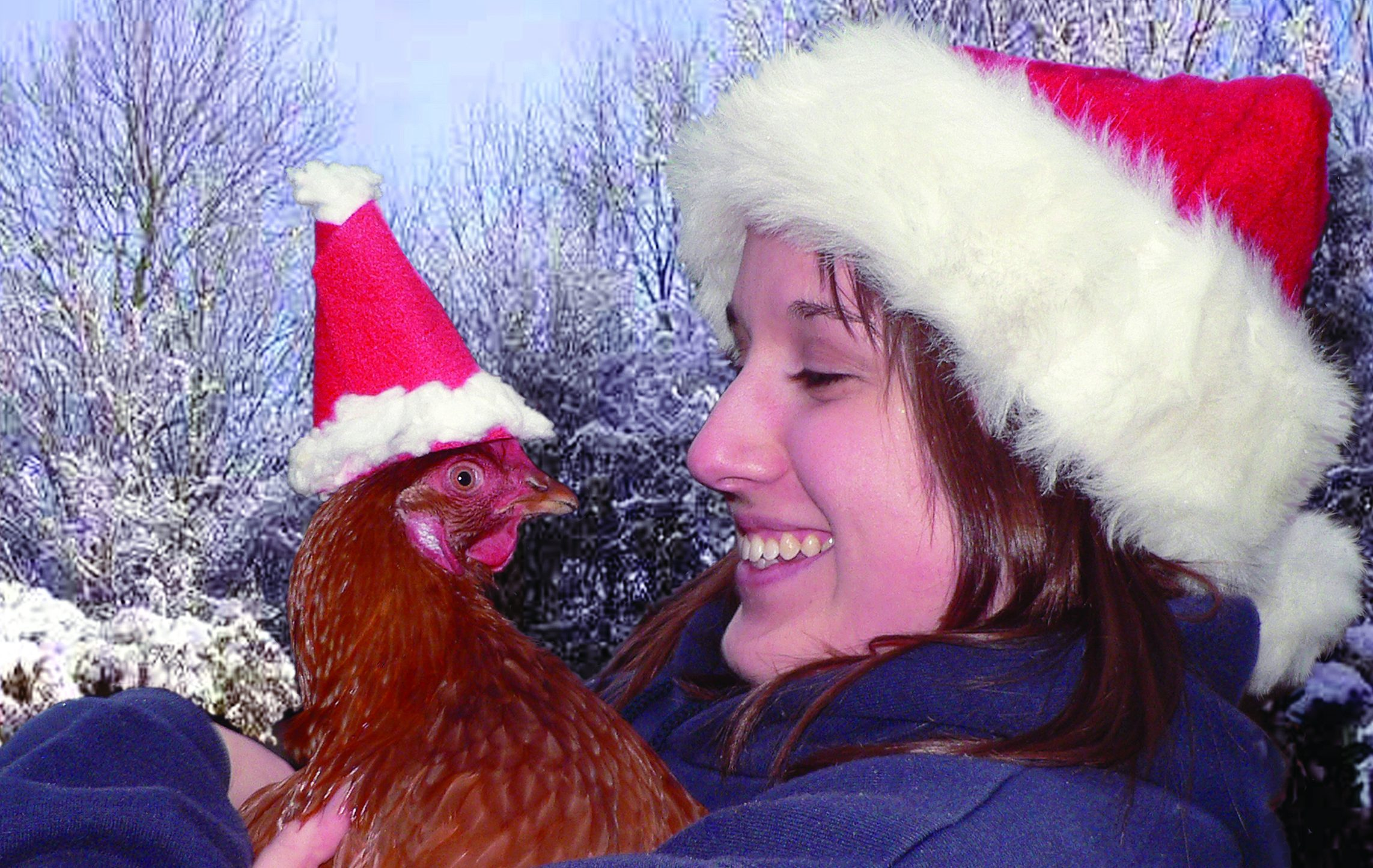 A British Hen Welfare Trust scheme gives the public  the chance to rehome hens.