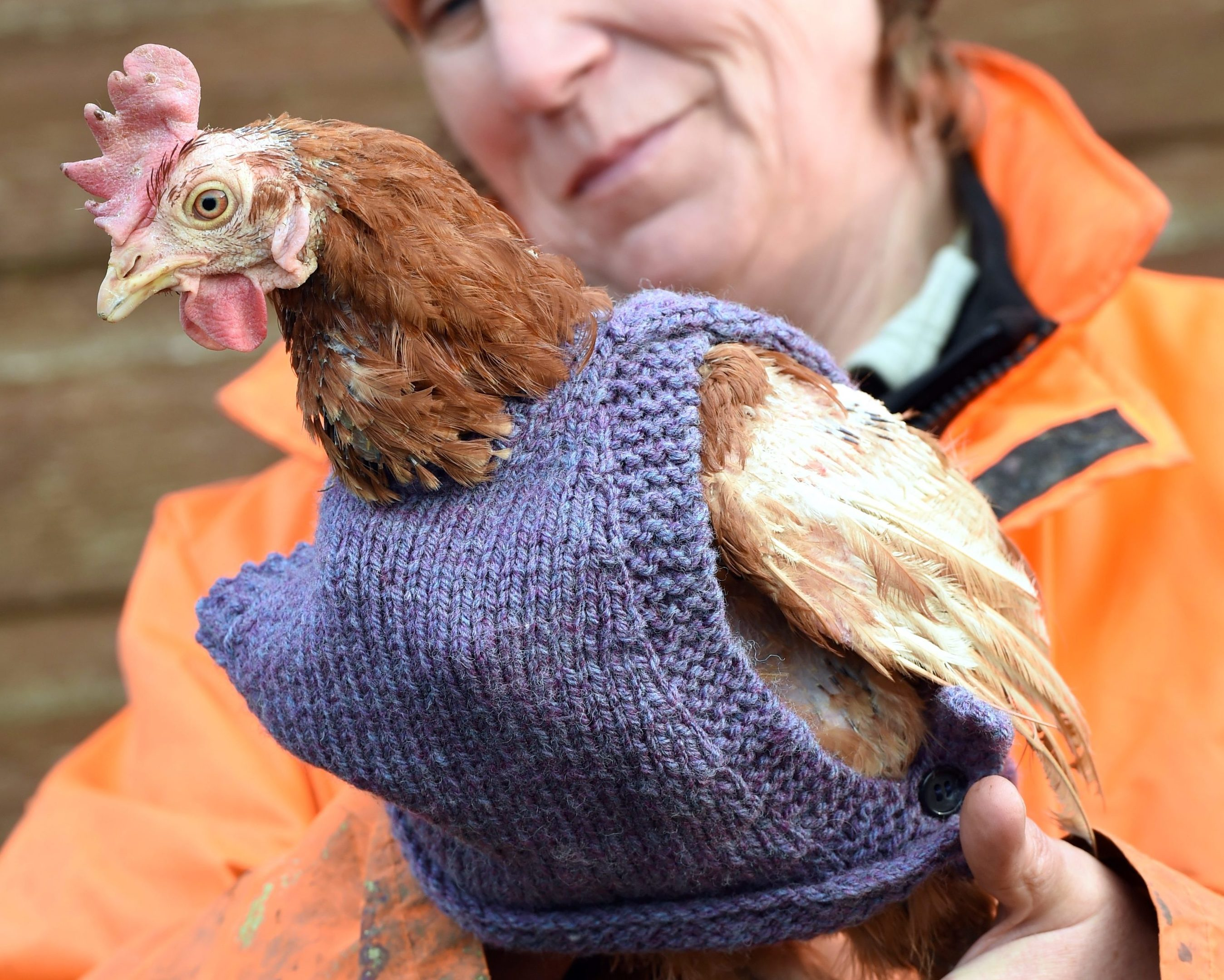 Pauline Marley with  one of the chickens.