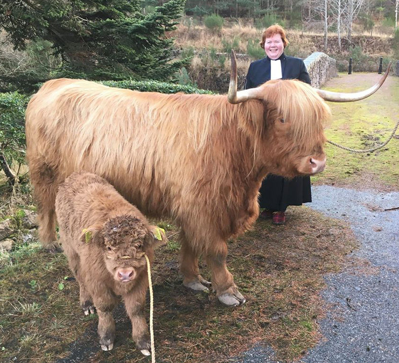 A Shetland pony, left, and a highland cow will feature too.
