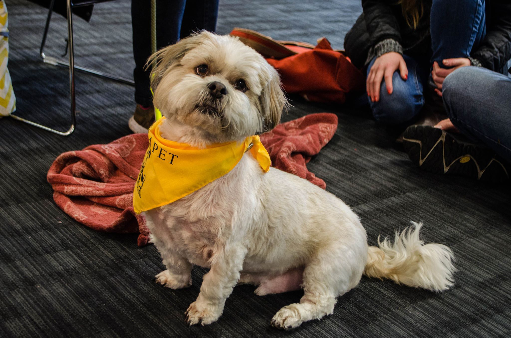 cute:  The canine therapy sessions will be available at RGU during the exam period.