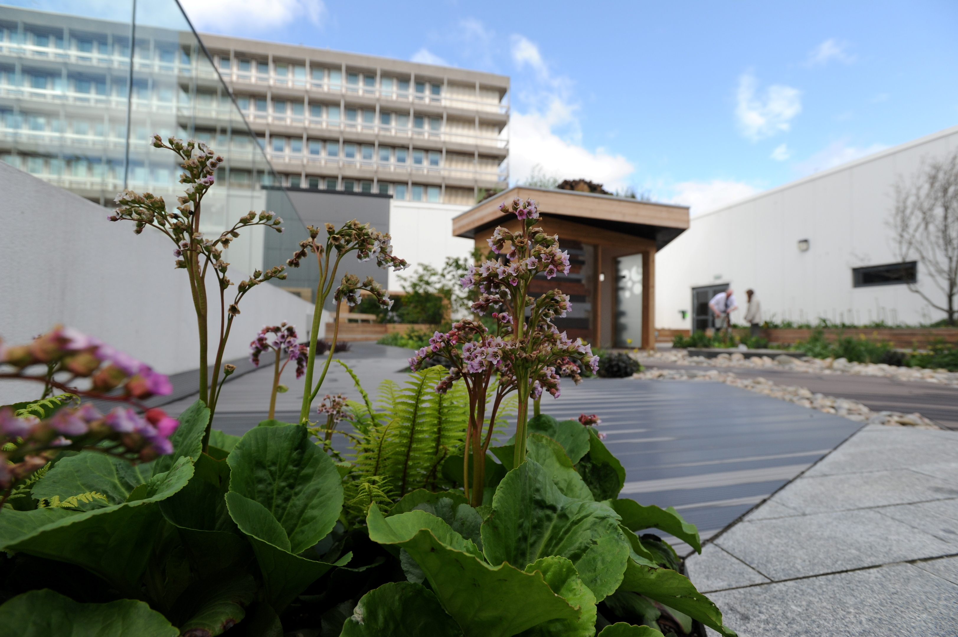 The Robertson Family Roof Garden at Aberdeen Royal Infirmary.