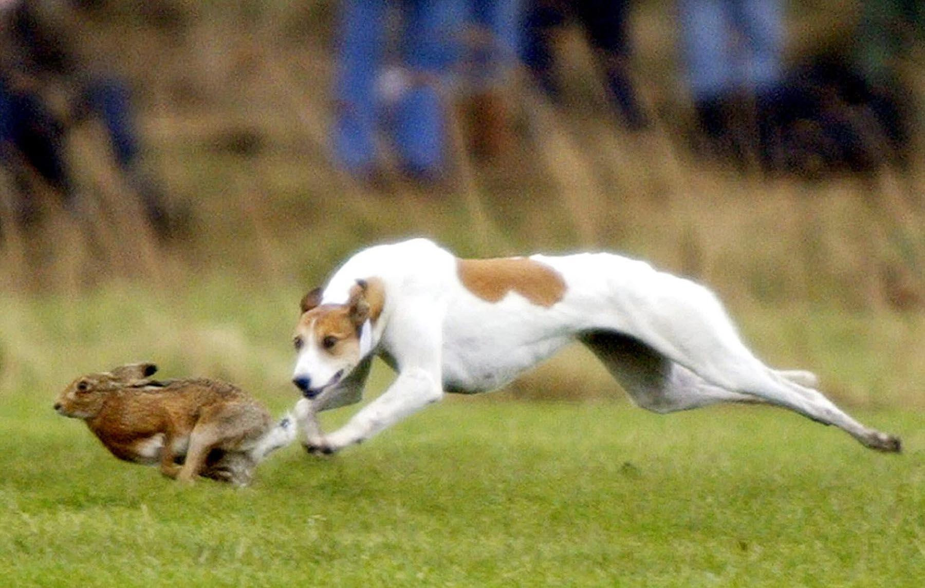The charges include being involved in hare coursing.