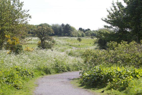 Scotstown Moor