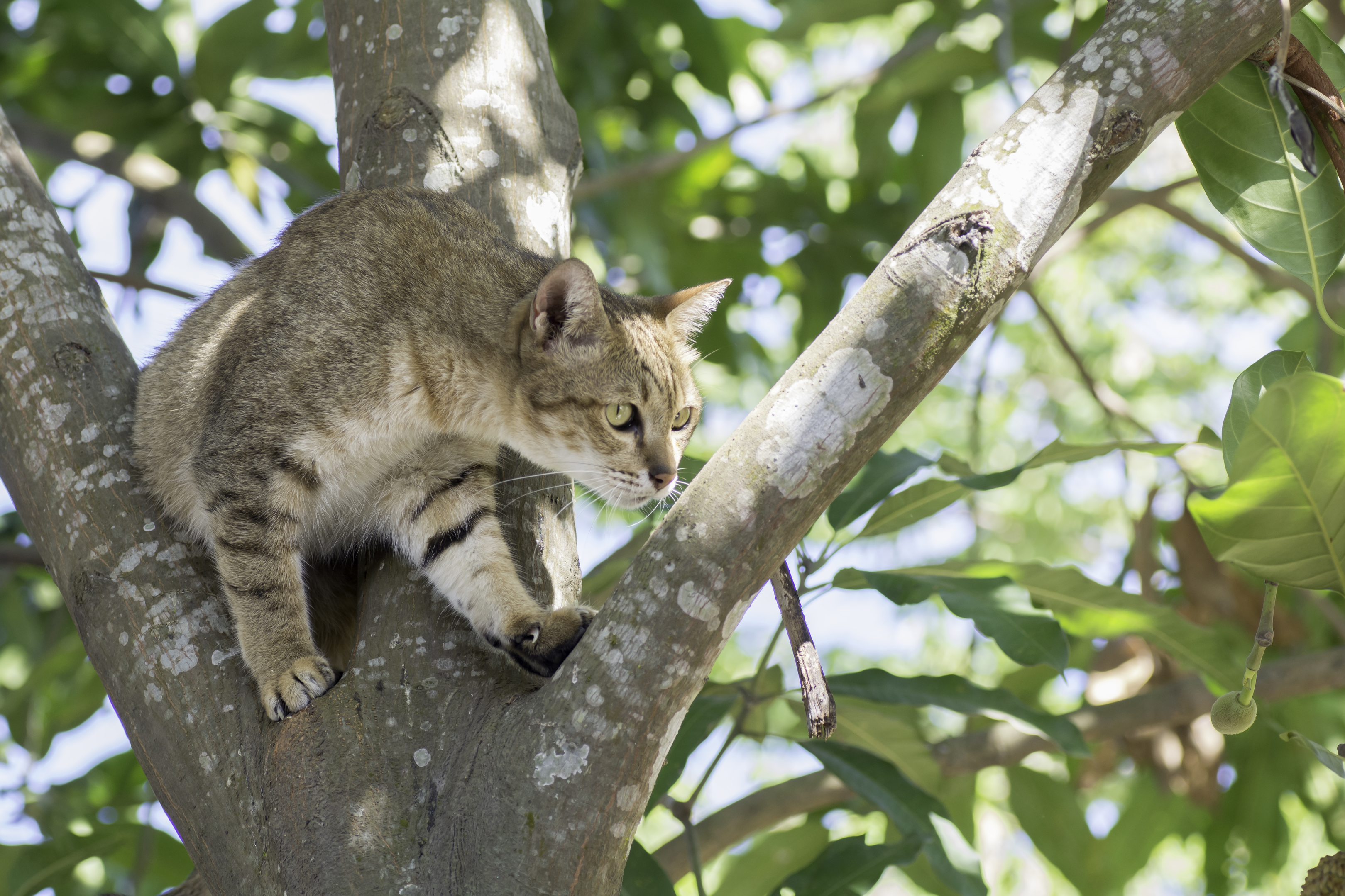 A cat in a tree. Picture not of incident.