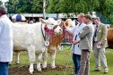 TURRIFF SHOW MONDAY  ALL CLASS WINNERS ARE JUDGED FOR THE OVERALL CHAMPION