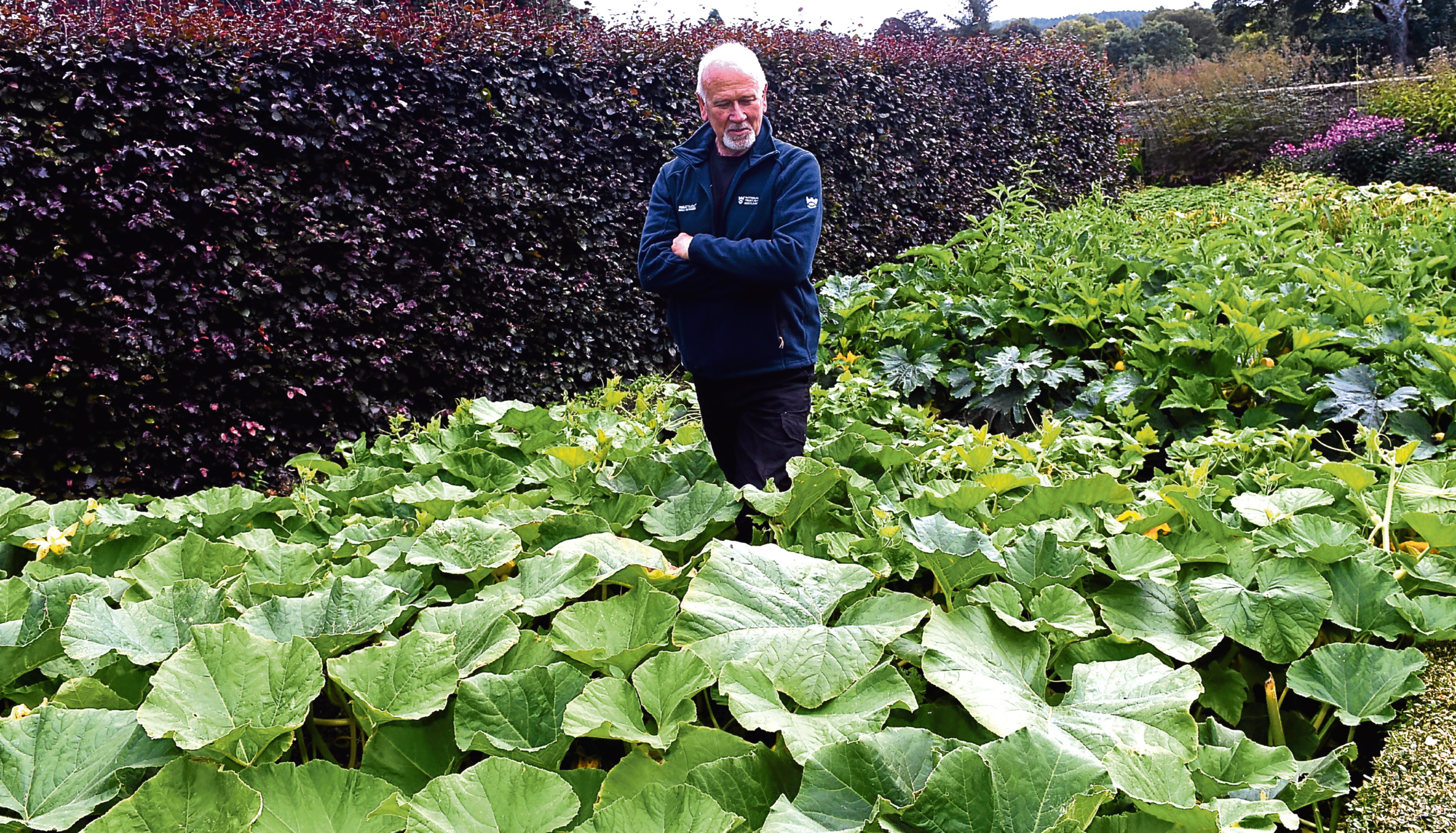 Castle Fraser has had pumpkins stolen which has meant an event has been cancelled. Pictured is Peter Randlo, Head gardener. 01/09/17 Picture by HEATHER FOWLIE