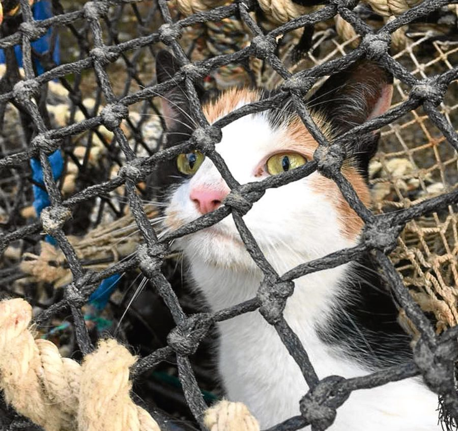 Nicky the cat was stuck in a lobster pot