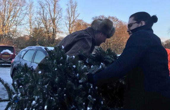 Kit Harington helped pack Christmas trees at Wardhill.