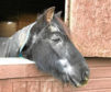 Fluke the horse, who has died.