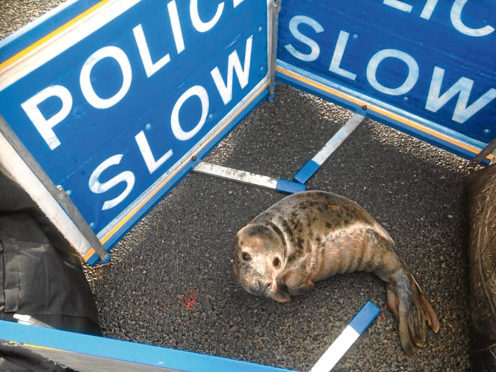 The seal was found on a North-east road.