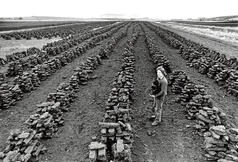 1977: Gordon Milne dries out some peat stacks.