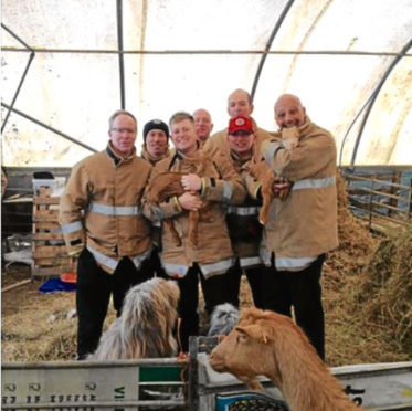 The firefighters with the baby goats at Doonies Farm.