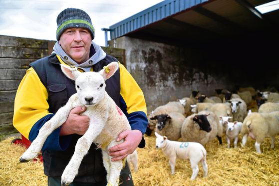 Robbie Wilson with a day old lamb at his farm.