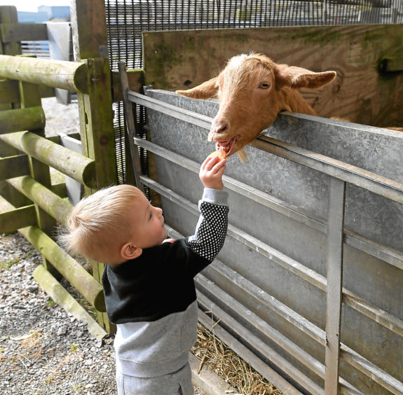 Lucas Downie feeding one of the goats.
