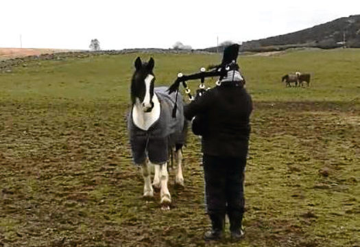 The unusual video of the rendition of Scotland the Brave has been viewed more than 800,000 times.