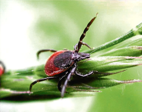 Officers in the North-east are at risk of tick bites.