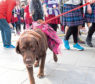 Dogs are welcome on the Aberdeen Kiltwalk