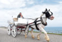 The new horse drawn carriage attraction at Aberdeen Beach.
