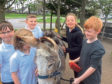 Pupils from the school with one of the donkeys.
