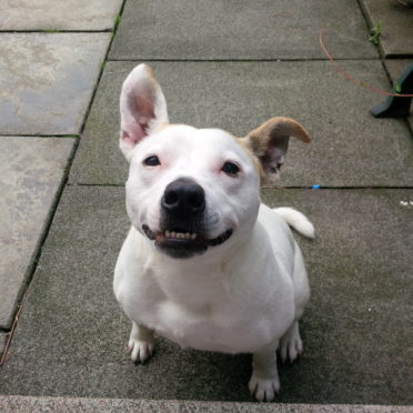 Snoop was rescued by the Scottish SPCA.