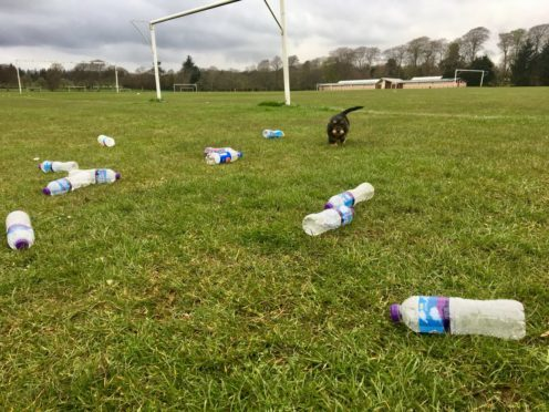 The litter at Hazlehead Park