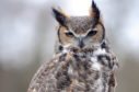The Owl and The Pussycat Centre will also be attending and will have some birds of prey on display.