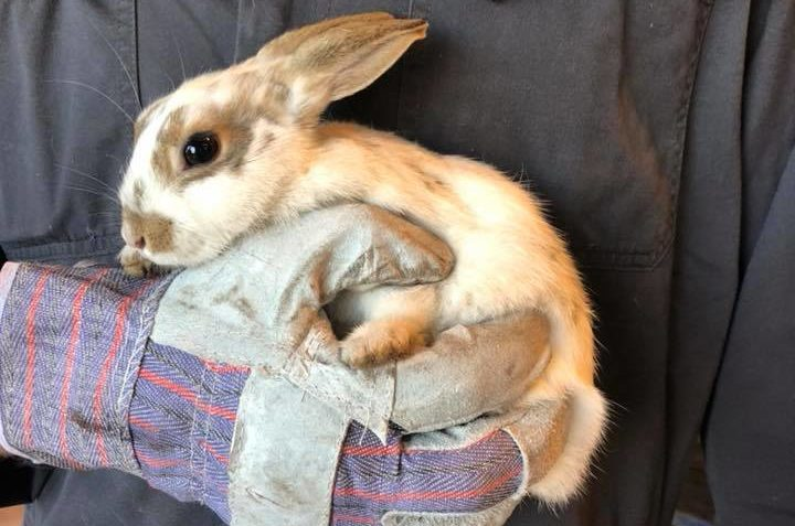 The bunny was found hidden behind the radiator grill