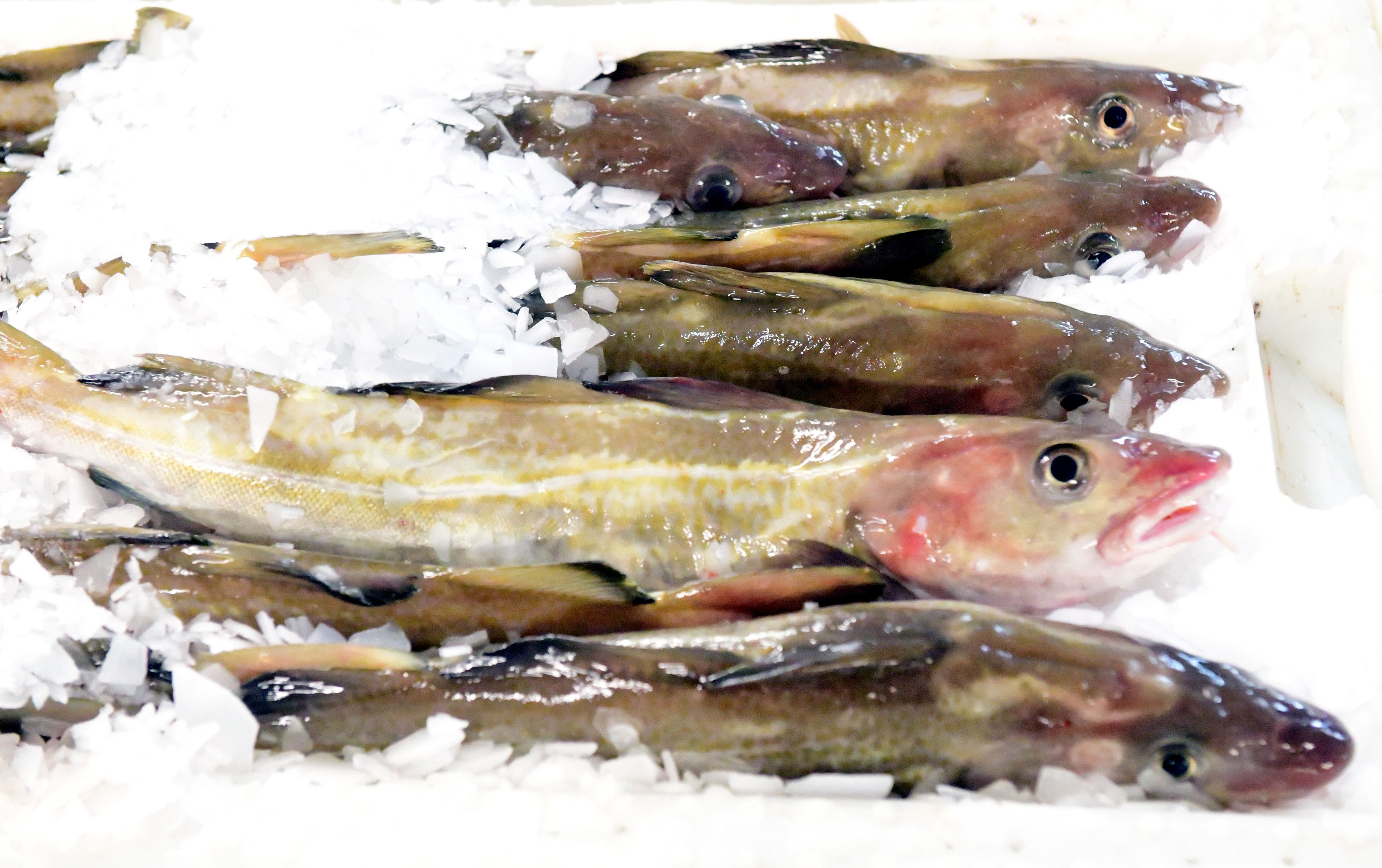 The new fish market in Peterhead opened yesterday.
