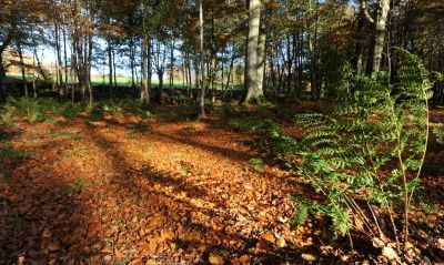 Conservationists want your views of Foggieton Woods and other north-east beauty spots