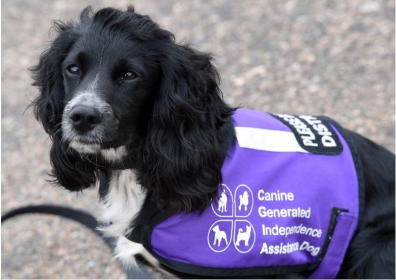 Esther Gooch's service dog, J