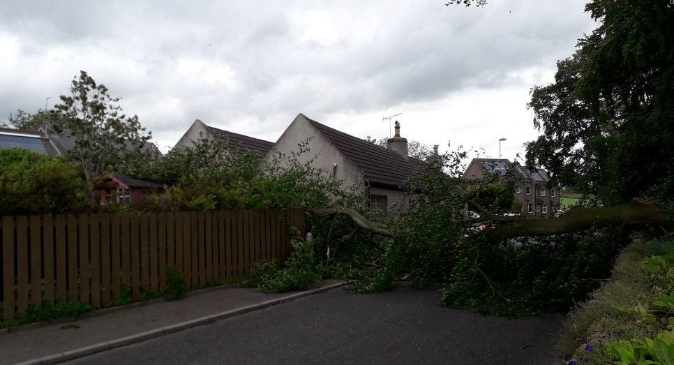 The fallen tree in Kirkton of Skene