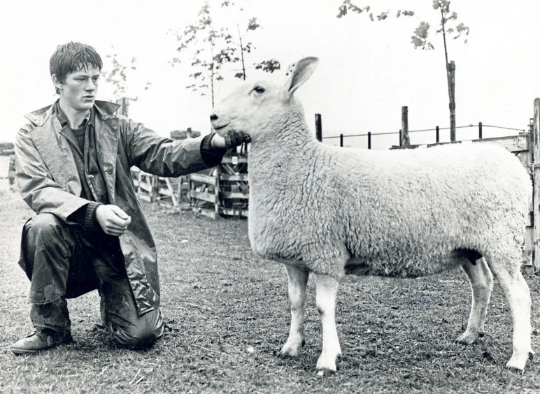 John McIrvine junior, of Balblythe, Strachan, exhibiting the overall sheep champion, a Border Leicester two-crop ewe