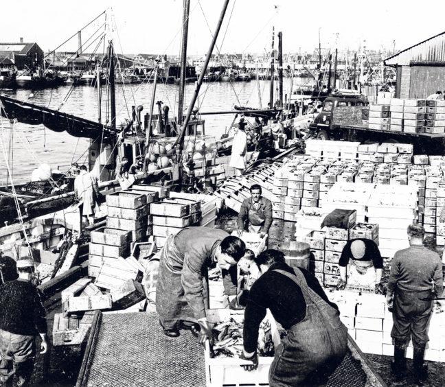 Unloading a large landing of herring