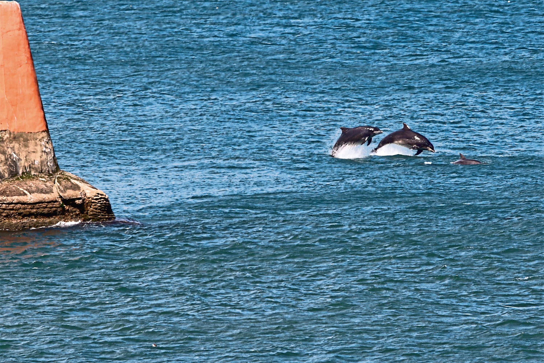Dolphins in Aberdeen