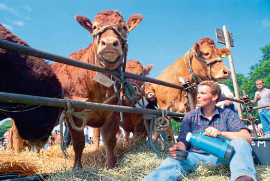Steven Mitchell, of Carron Mains, Aberlour, gets set to enjoy a cup of tea at the Banchory Show under the watchful eyes of some of the Ben Craig Limousins