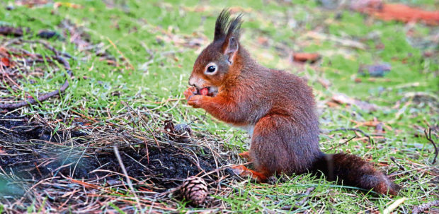 A red squirrel was found dead while trapped in a plastic jar