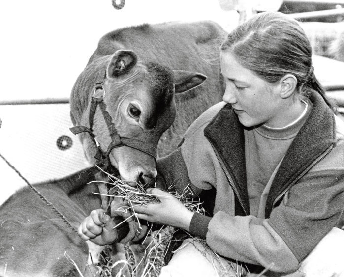 Nice Jersey – 13-year-old Catherine McKinnon looks after her Jersey calf