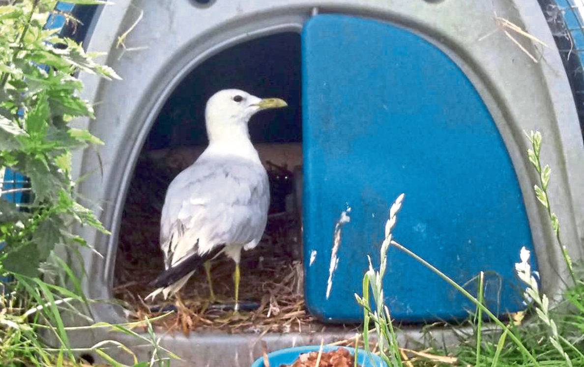 Seagull Rurie was found to be 21 years old