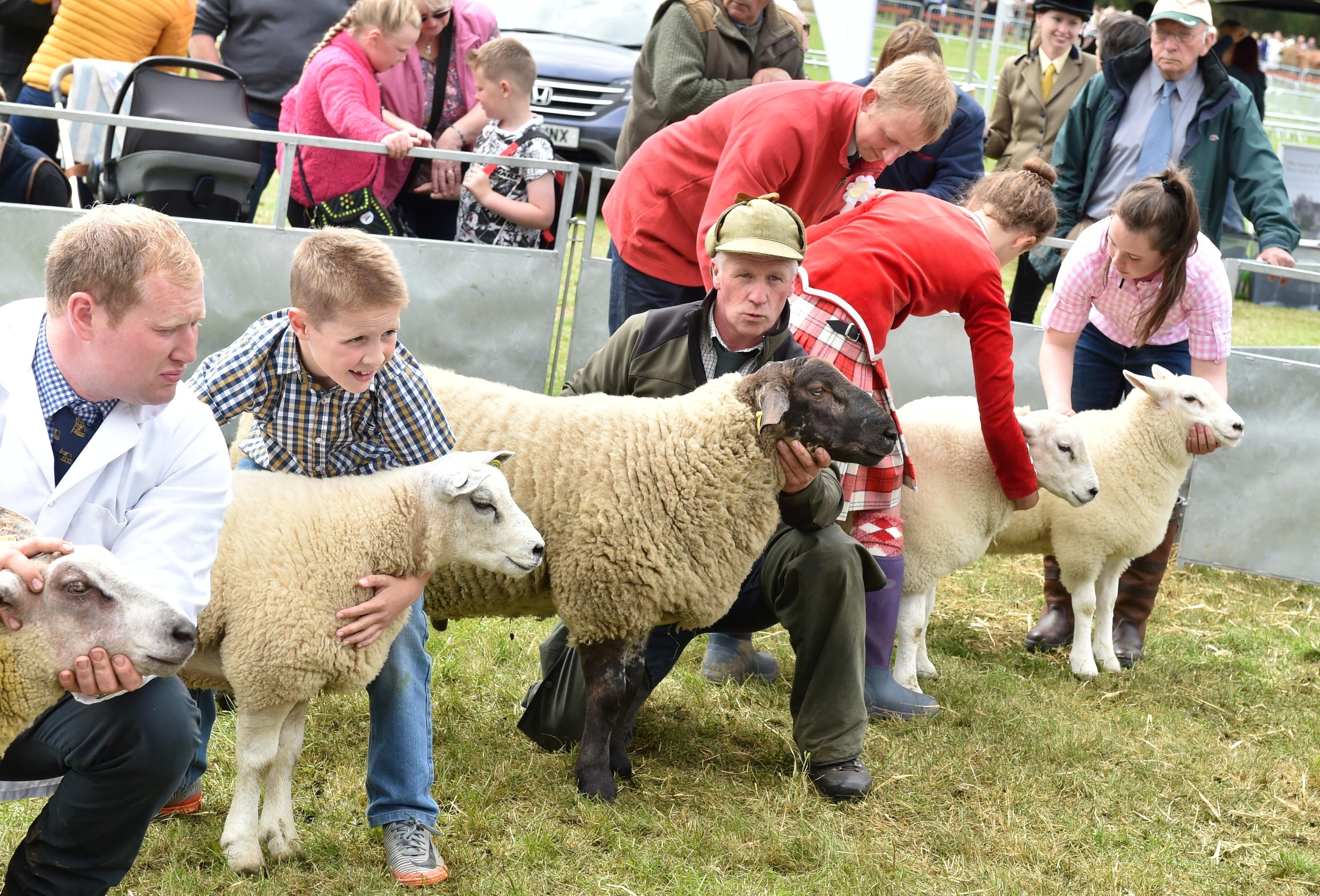 Country fun: Sheep judging at the Tarland Show.