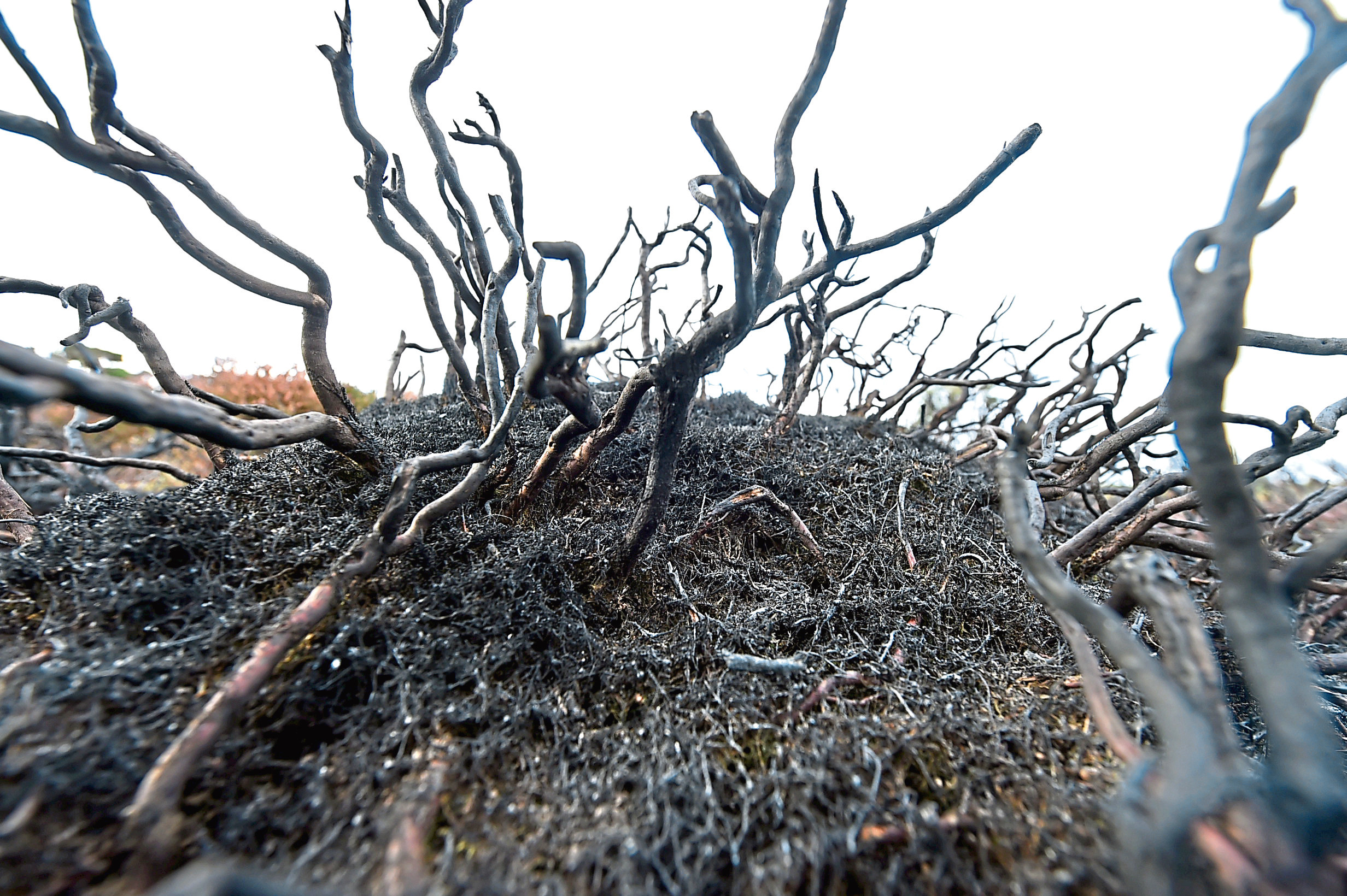 The fires at the Gramps have caused widespread damage to vegetation