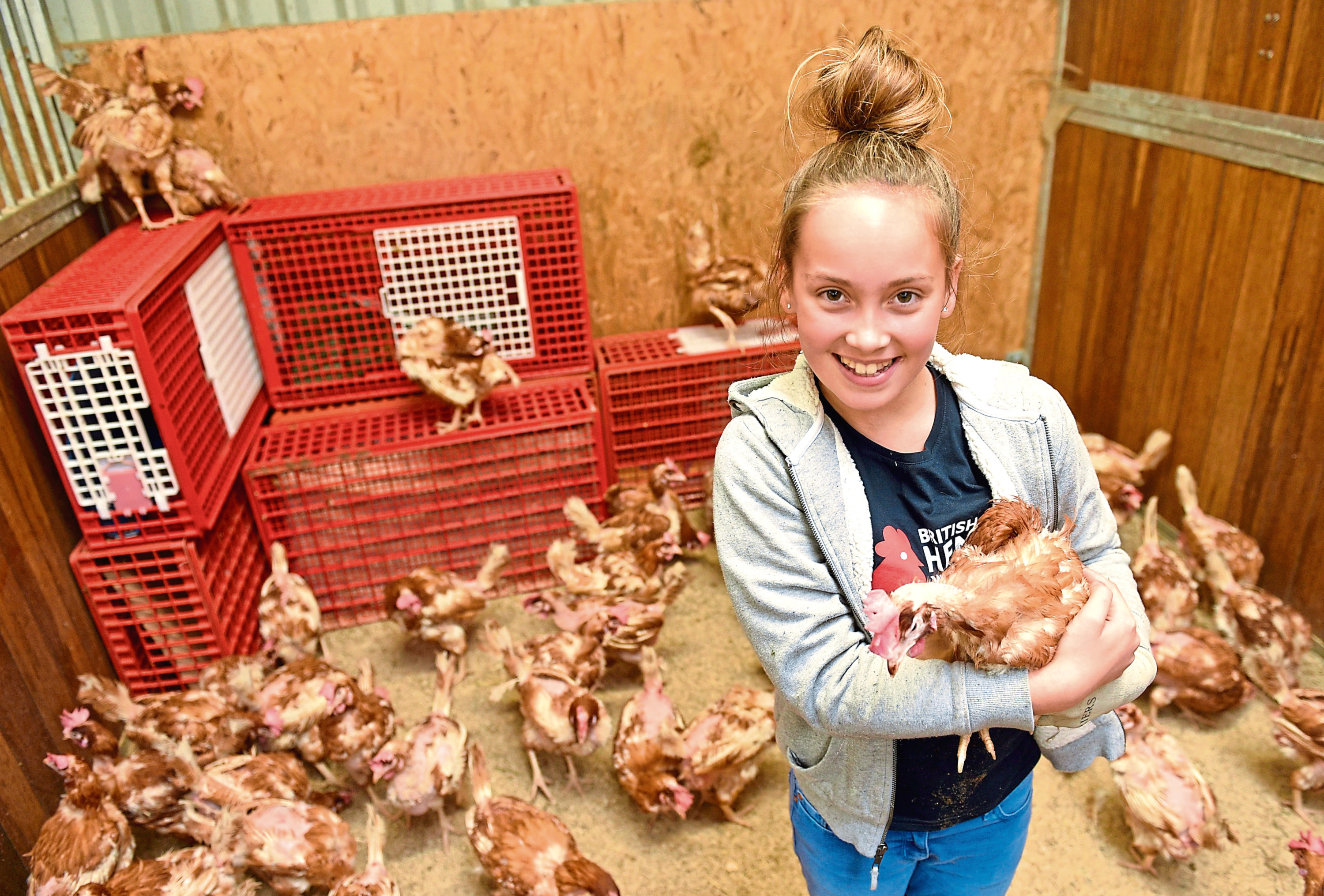 Jordan Kay, 11, with one of the chickens which are being rehomed by the British Hen Welfare Trust at Cheyne Farm House, Stonehaven