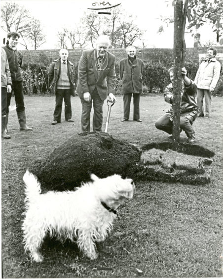 1984: West Highland Terrier Roy sniffs out an opportunity as Lord Provost Henry Rae officially plants this tree to mark the start of National Tree Week