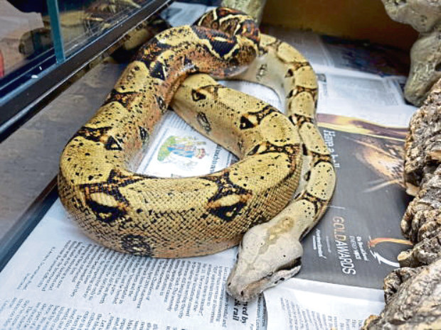 Esmerelda the snake  was taken to the Scottish SPCA at Drumoak where she later died