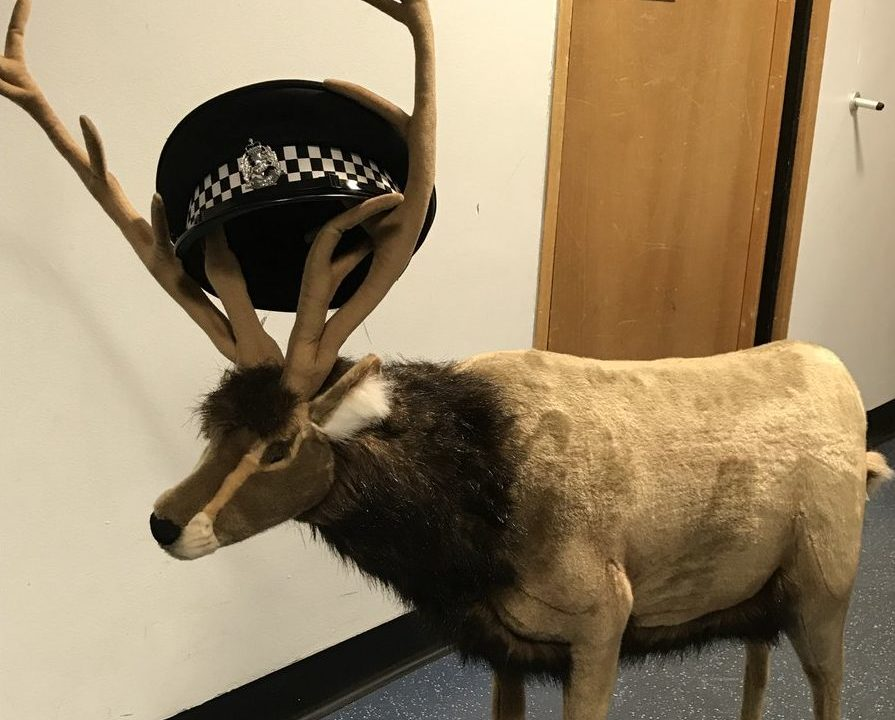 The reindeer has been returned to the store