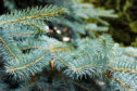 People in Aberdeen are being reminded to recycle their real Christmas trees
