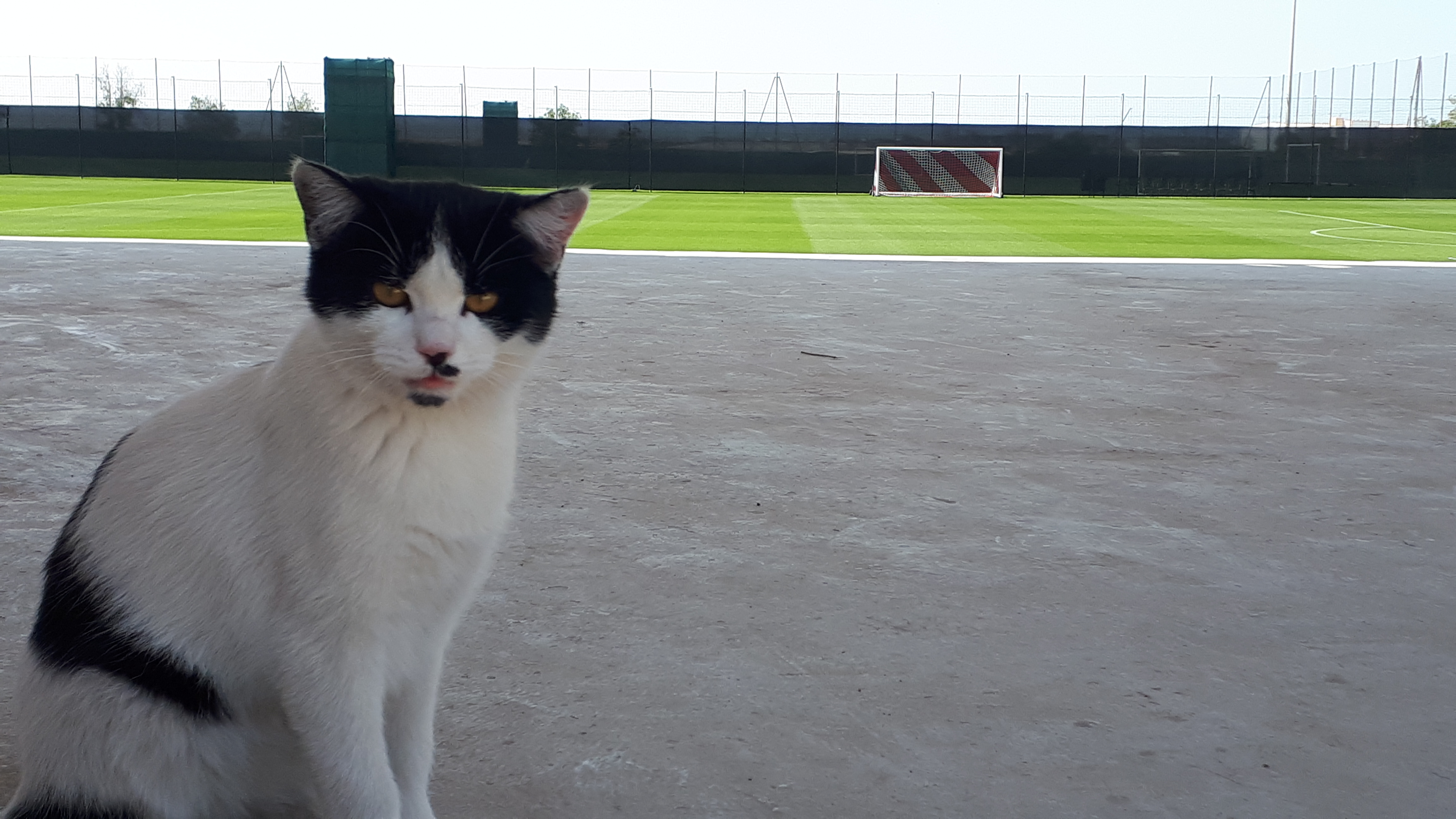 The cat I met at the Jebel Ali Centre of Excellence.